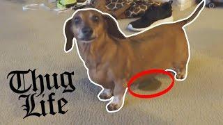 FUNNIEST DOG EVER!!