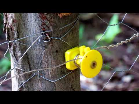Solar powered Electric fence for your garden to keep the critters out