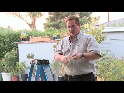Home & Lawn Pest Control : How to Scare Away Birds With Old CDs