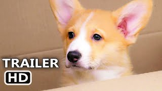 A VERY CORGI CHRISTMAS Trailer (2019) Romance Movie