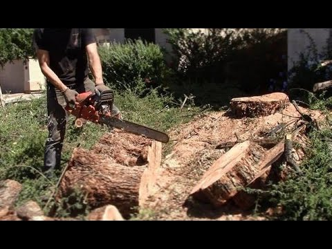 Cutting Up A Burly Mesquite Tree