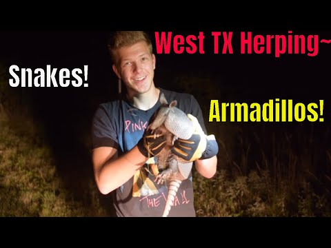 Finding Snakes, Opossums and Armadillos in West Texas!