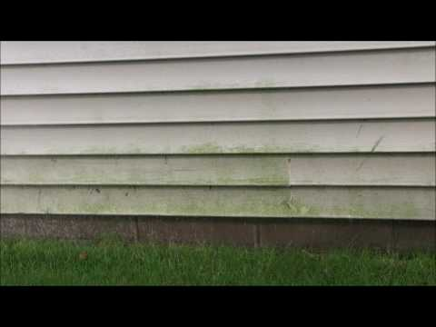 Cleaning Mildew/Mold from Vinyl siding