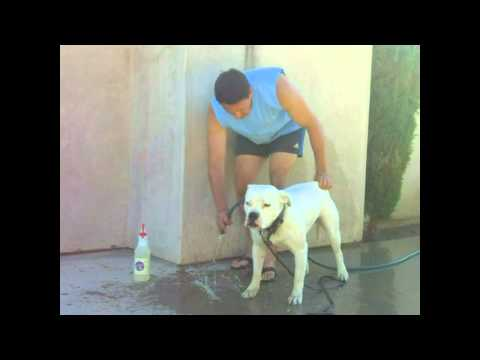 Dog Cat Horse Skin Rash Hot Spot Allergies Fungus Ring Worm treatment