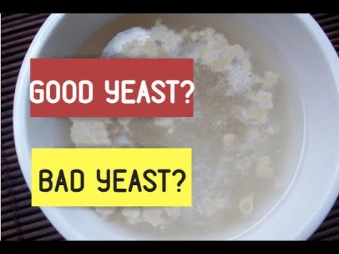 Yeast Types & How To Proof Yeast. How To Know If Yeast Is Alive