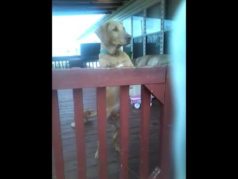 My best friend's dog barking when I'm at her house