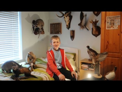 12-Year-Old Taxidermist Loves Collecting Stuffed Animals