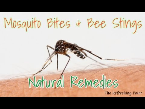 Proven Natural Home Remedies to Treat Insect Bites & Bee Stings 🐝 Reduce Itching & Relieve Swelling