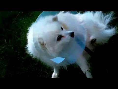 Wound Healing Cone Stops Dogs from Licking Their Wounds