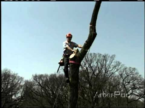 Top Removal with Arborist BLock part 2