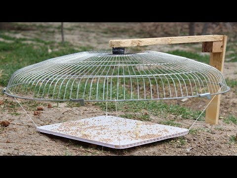 How to Make a Simple Bird Trap