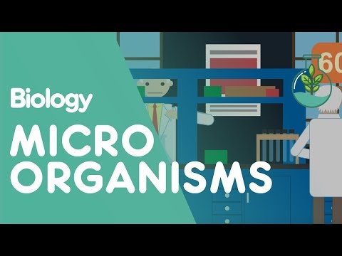Culturing Microorganisms Part 1| Biology for All | FuseSchool