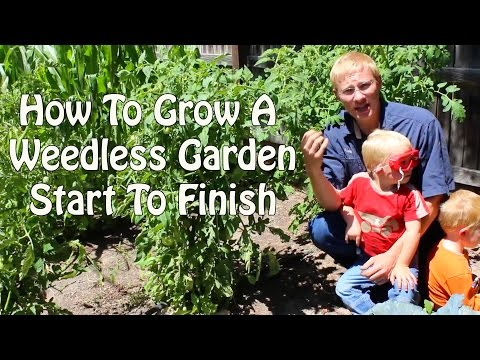 How To Grow A Weedless Garden Start to Finish