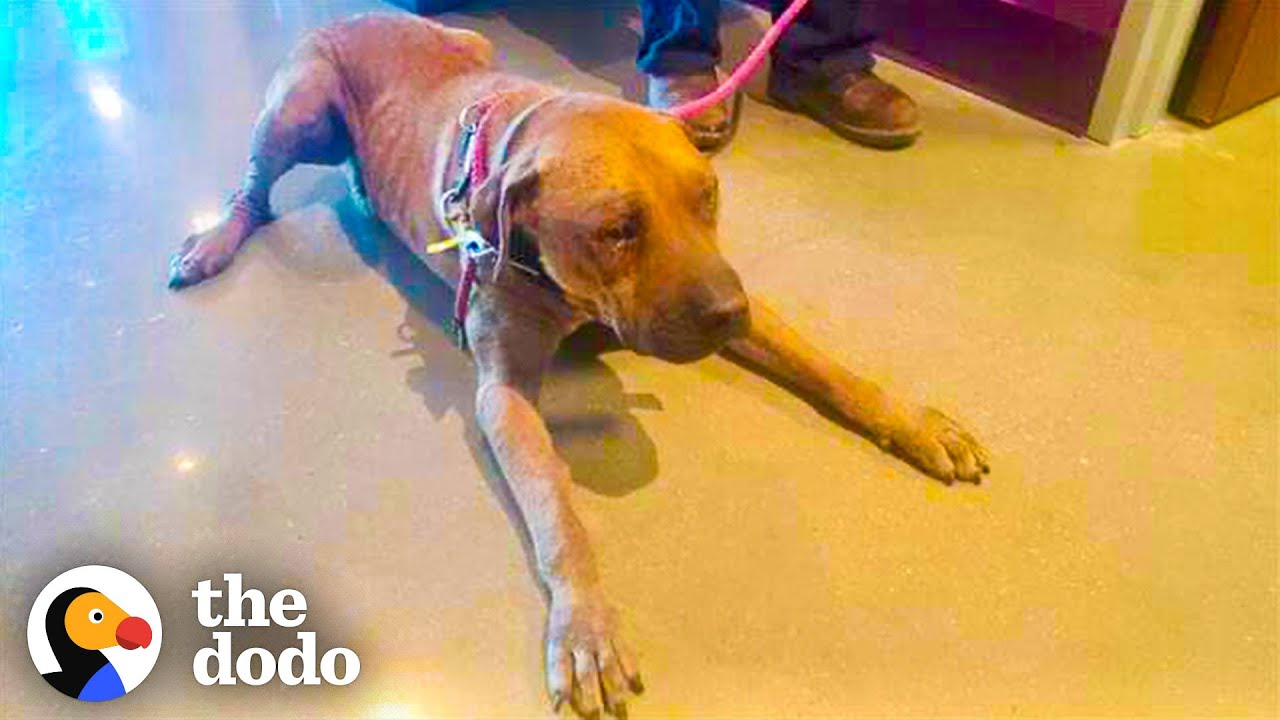 Dog Chained Up For Years Comes To Life When He Meets His Favorite Cat | The Dodo Adopt Me!