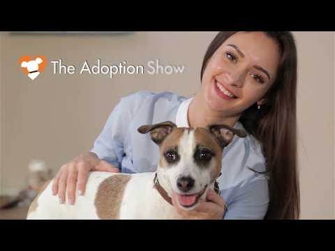 The Adoption Show - episode 1