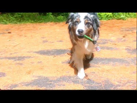 Scent Training Bugsie | ServiceDog Vlog