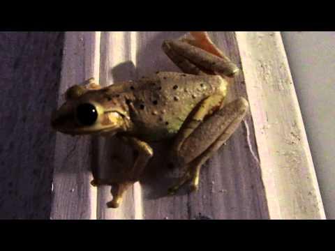 FROGS on my Front Door #3