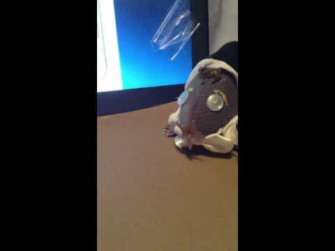 Mole Project Video