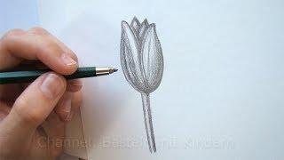 Zeichnen Lernen Fur Anfanger Bio Apfel Zeichnen Mit Bleistift