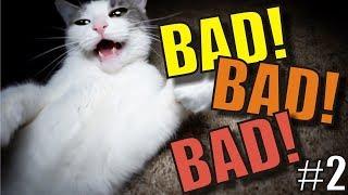 Talking Kitty Cat - BAD! BAD! BAD! #2