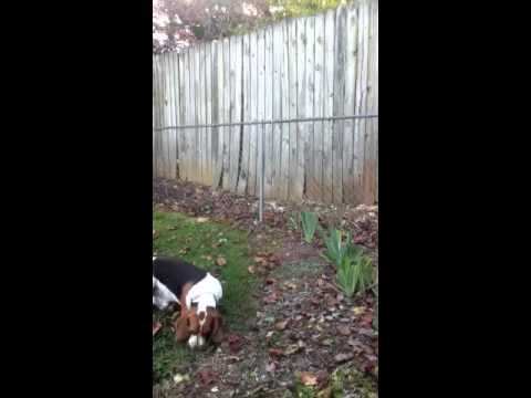 Barking Dog Next Door Wood Fence 1
