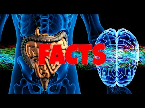 AMAZING UNKNOWN FACTS ABOUT YOUR GUT!