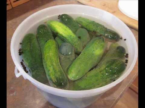 Kosher Pickles in a Pail Recipe