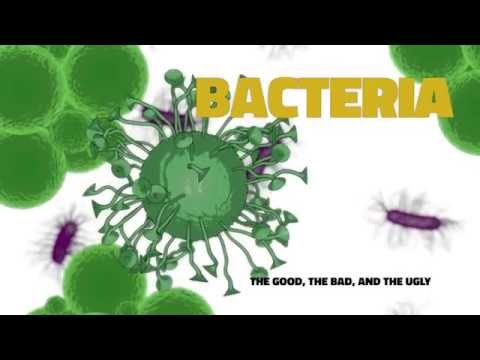 Food Safety for Food Pantries: Bacteria (The Good, The Bad and The Ugly) (3/8)