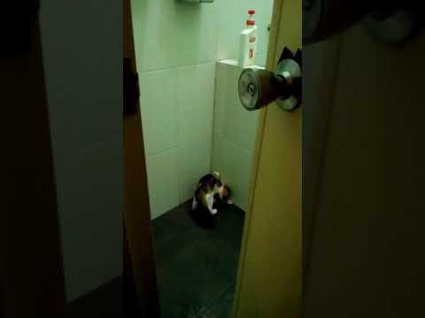 Xxx Mp4 Cerdasnya PUS MUN Pipis Di WC 3gp Sex