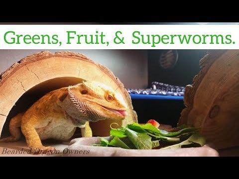 Bearded Dragon (Blaze) - Greens, Fruit, & Superworms [4K].