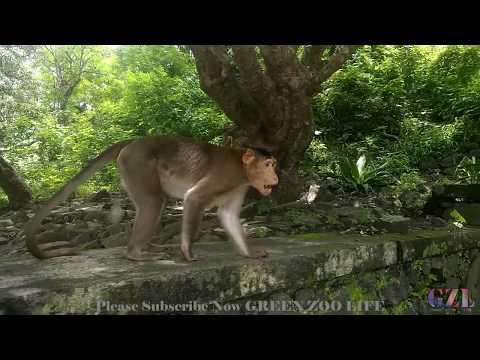 funny monkeys in mumbai | Elephanta Funny Monkeys | Funny Monkeys | Monkeys