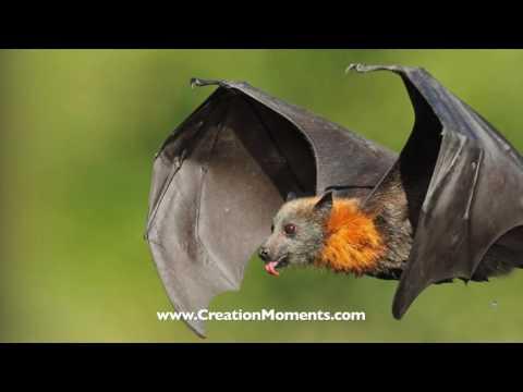 A Real Bat Computer