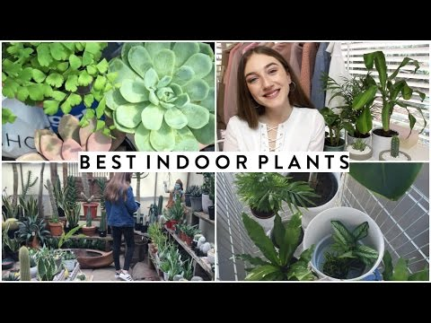 EASY BEDROOM PLANTS YOU CAN'T KILL // 2016