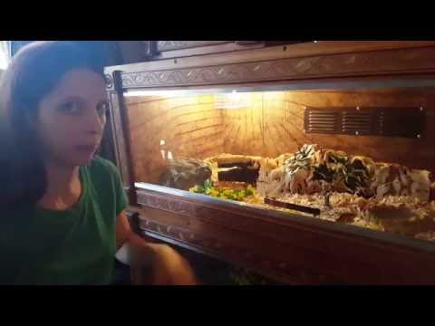 how to set up a reptile enclosure