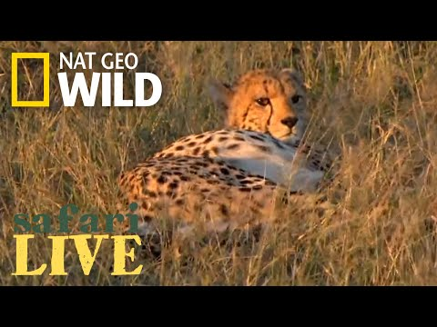 Safari Live - Day 159 | Nat Geo Wild