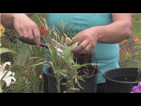 Bamboo Plants : How to Prune a Bamboo Plant
