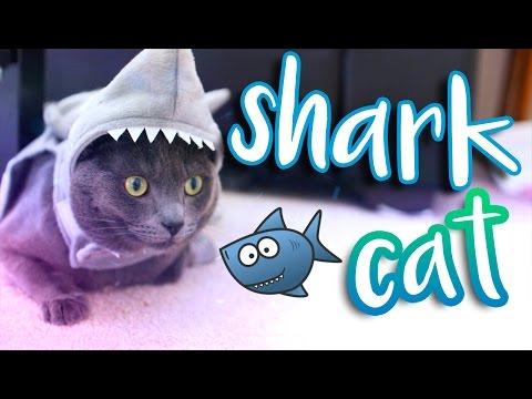 SHARK CAT?! - MY CAT'S HALLOWEEN COSTUME!