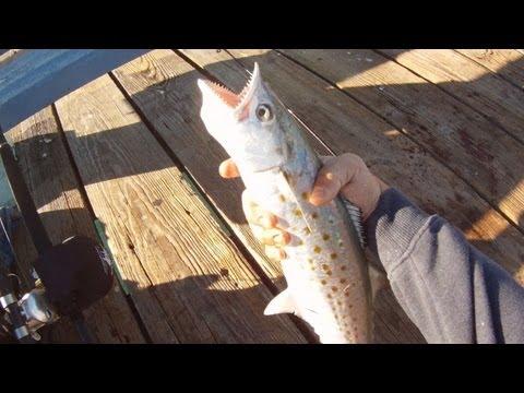 Pier Spanish Mackerel Fishing!