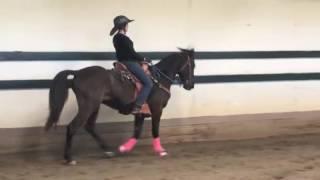 Cisco Kid- Tennessee Walking Horse