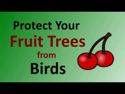 Protect Fruit Trees From Birds