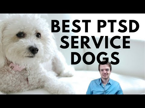Best PTSD Service Dog Breeds - How Can Dogs Help You With Anxiety and Depression?