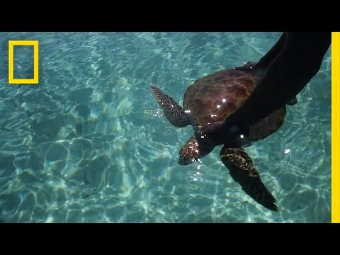 Saving Sea Turtles in the Solomon Islands | Short Film Showcase