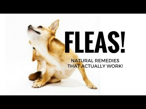 How to Get Rid of Fleas on Dogs - Top 5 Natural Home Remedies - Flea Treatment for Dogs (& Cats)