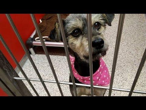 Julieanna - 5 Year Old Female Adoptable at Pima Animal Care Center since 4-7-18 filmed 4-16-18