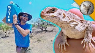 Catching a Lizard Using NOTHING but WATER!