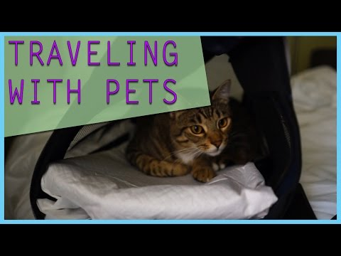 How to travel with pets in the military [Flying with cats & small dogs]