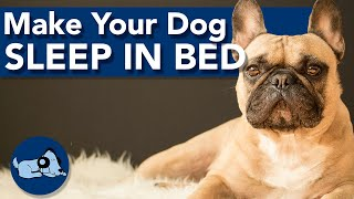 How to Make Your Dog Sleep in its Bed!