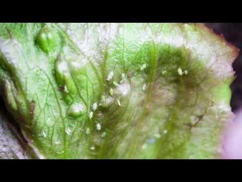 Natural Pest Control for Healthy Plants in your Vegetable Garden
