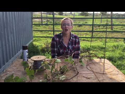 How to make a grape vine tree