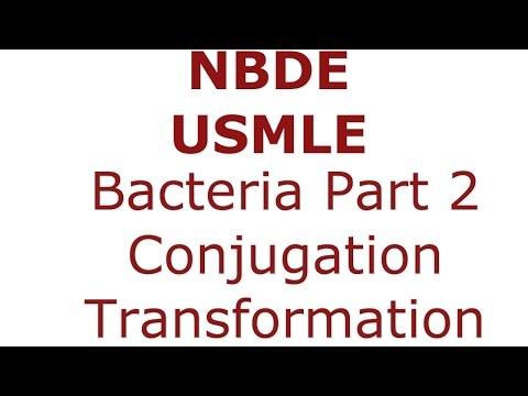 Bacteria - Conjugation, Transformation, Transduction. NBDE/USMLE
